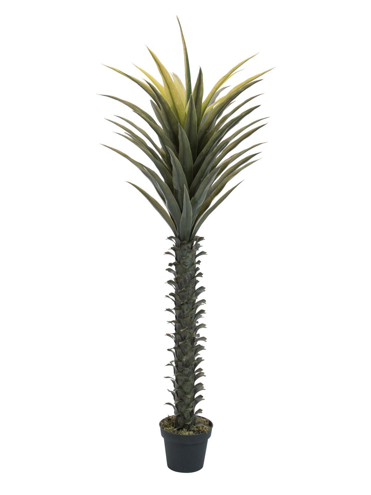 EUROPALMS pianta artificiale Yucca palma, 165cm