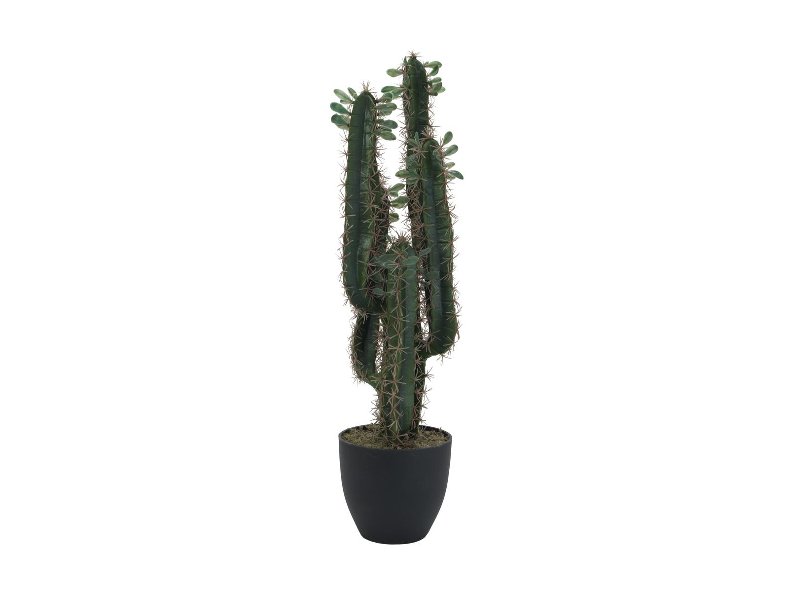 EUROPALMS di cactus Messicano con foglie, 75cm