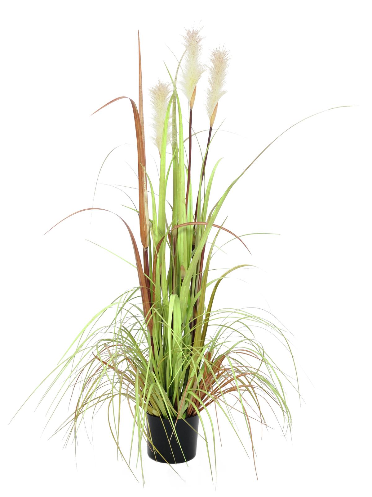 EUROPALMS crescita Selvaggia, 120cm