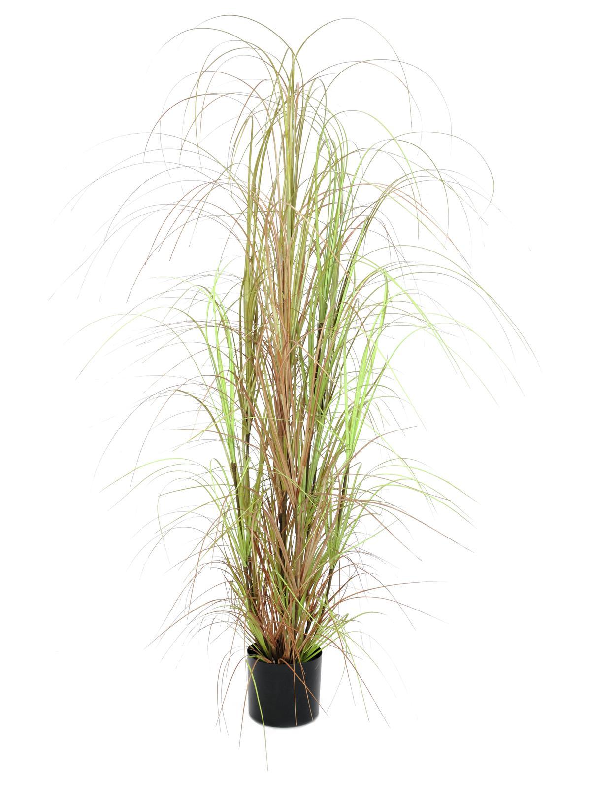 EUROPALMS Grasbusch, künstlich, 150cm