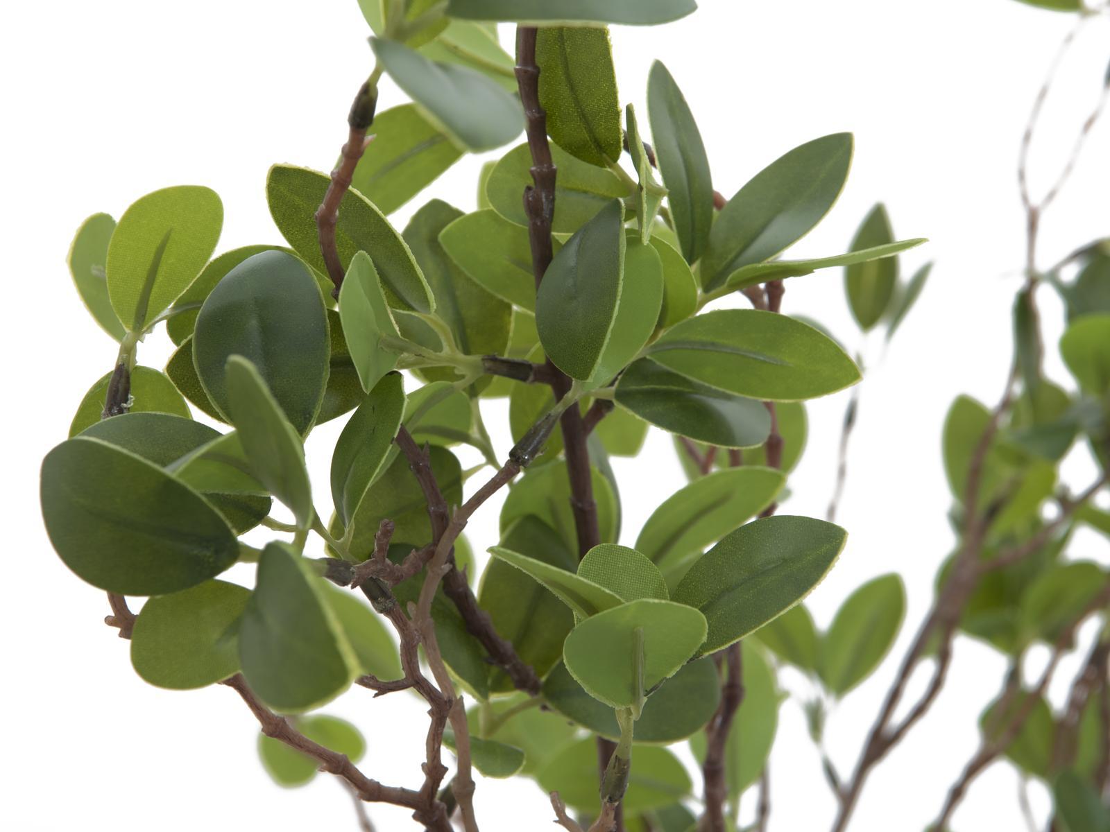 EUROPALMS arbusto Sempreverde 120cm