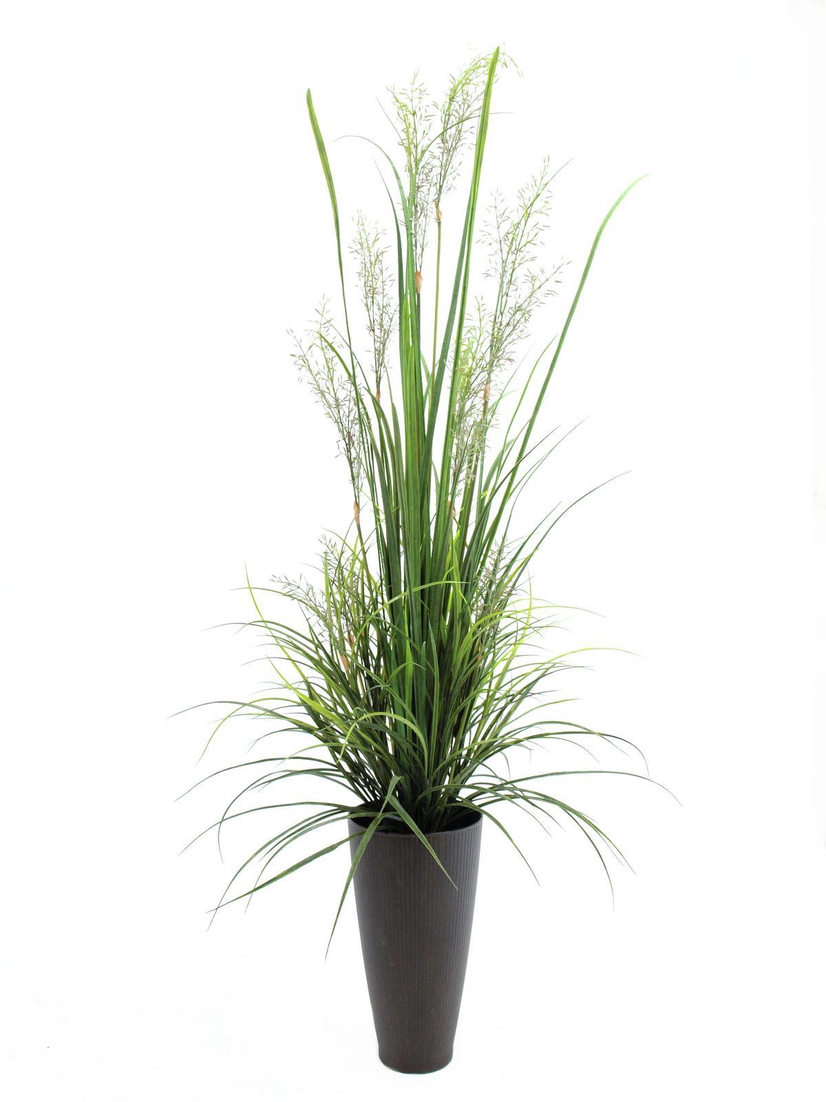 EUROPALMS Fiume di erba aprile, 175cm