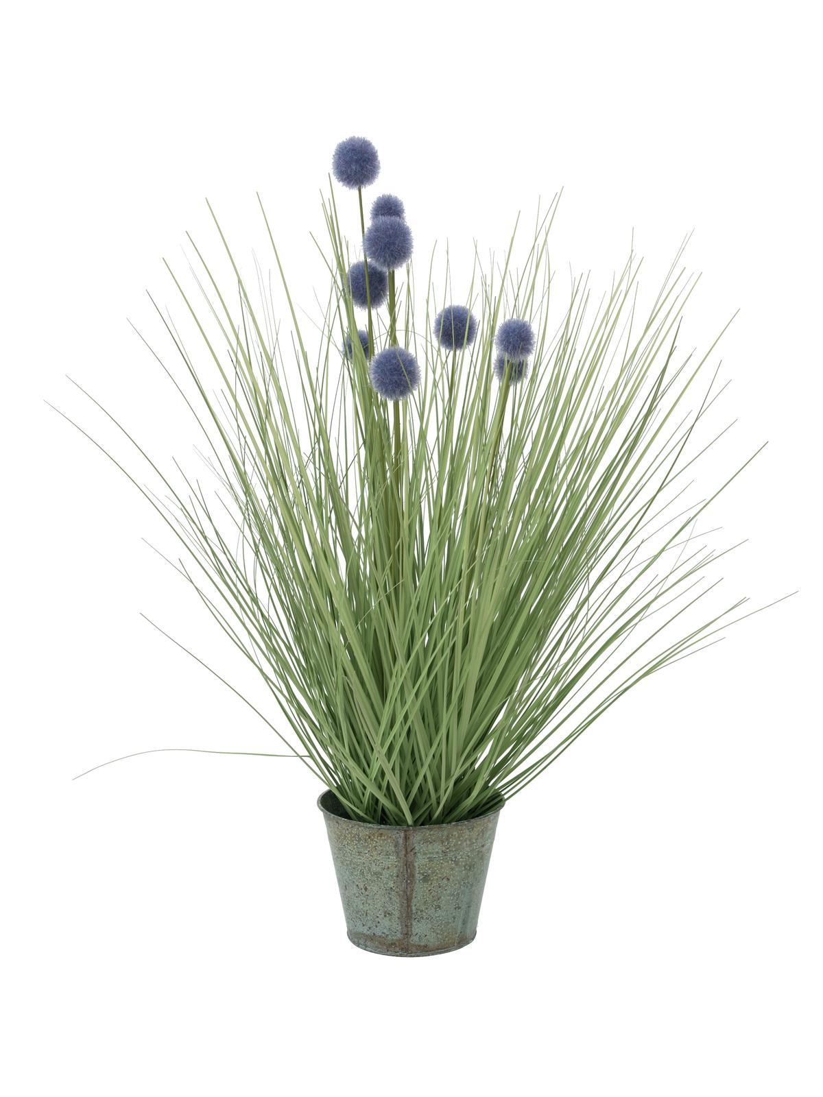 EUROPALMS Pompon Gras, 53cm, viola