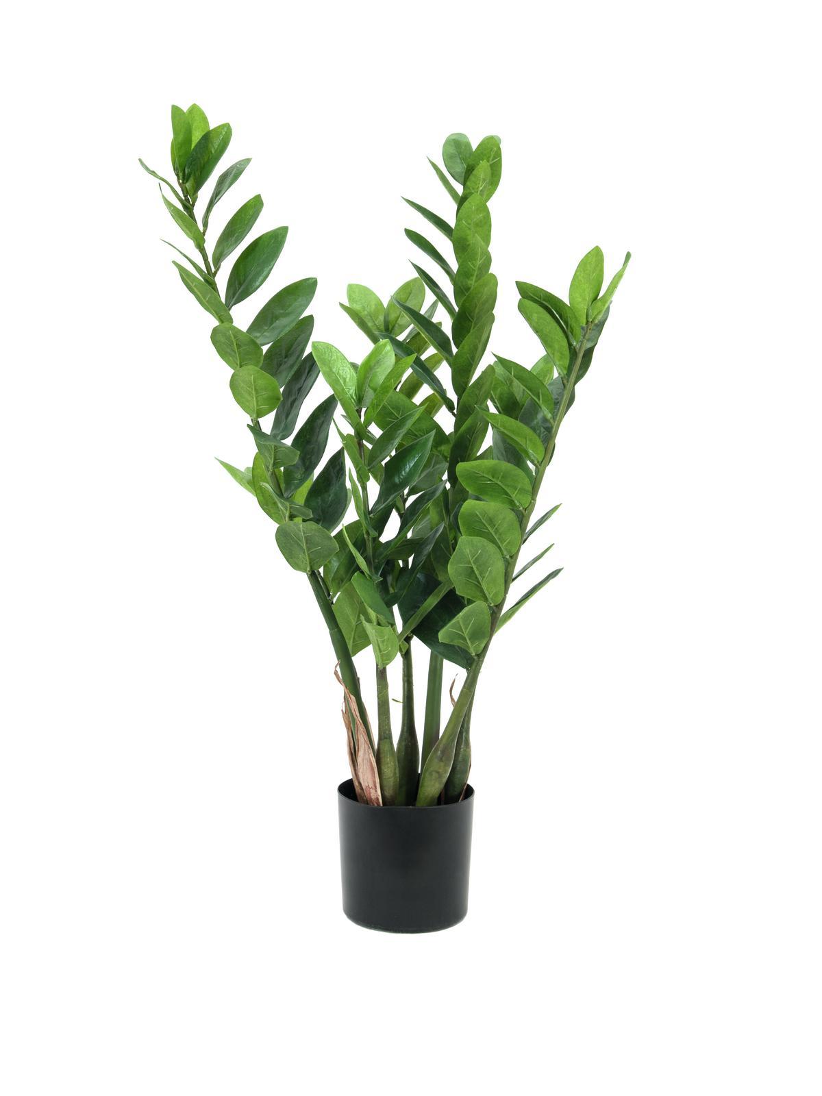 EUROPALMS Zamifolia, Kunstpflanze, 70cm