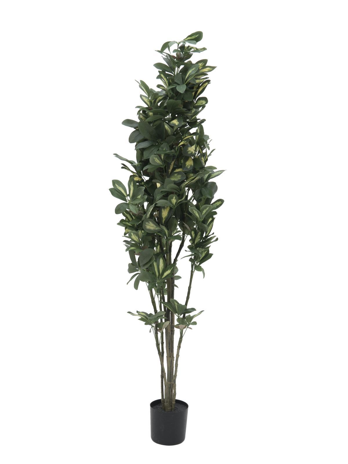 EUROPALMS Schefflera, künstlich, 120cm
