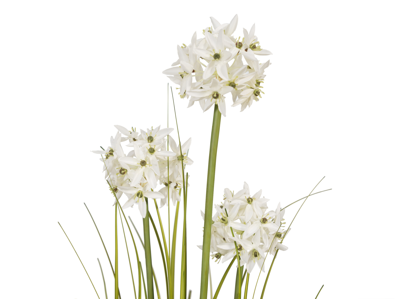 EUROPALMS Alliumgras, Kunstpflanze, weiß, 120 cm