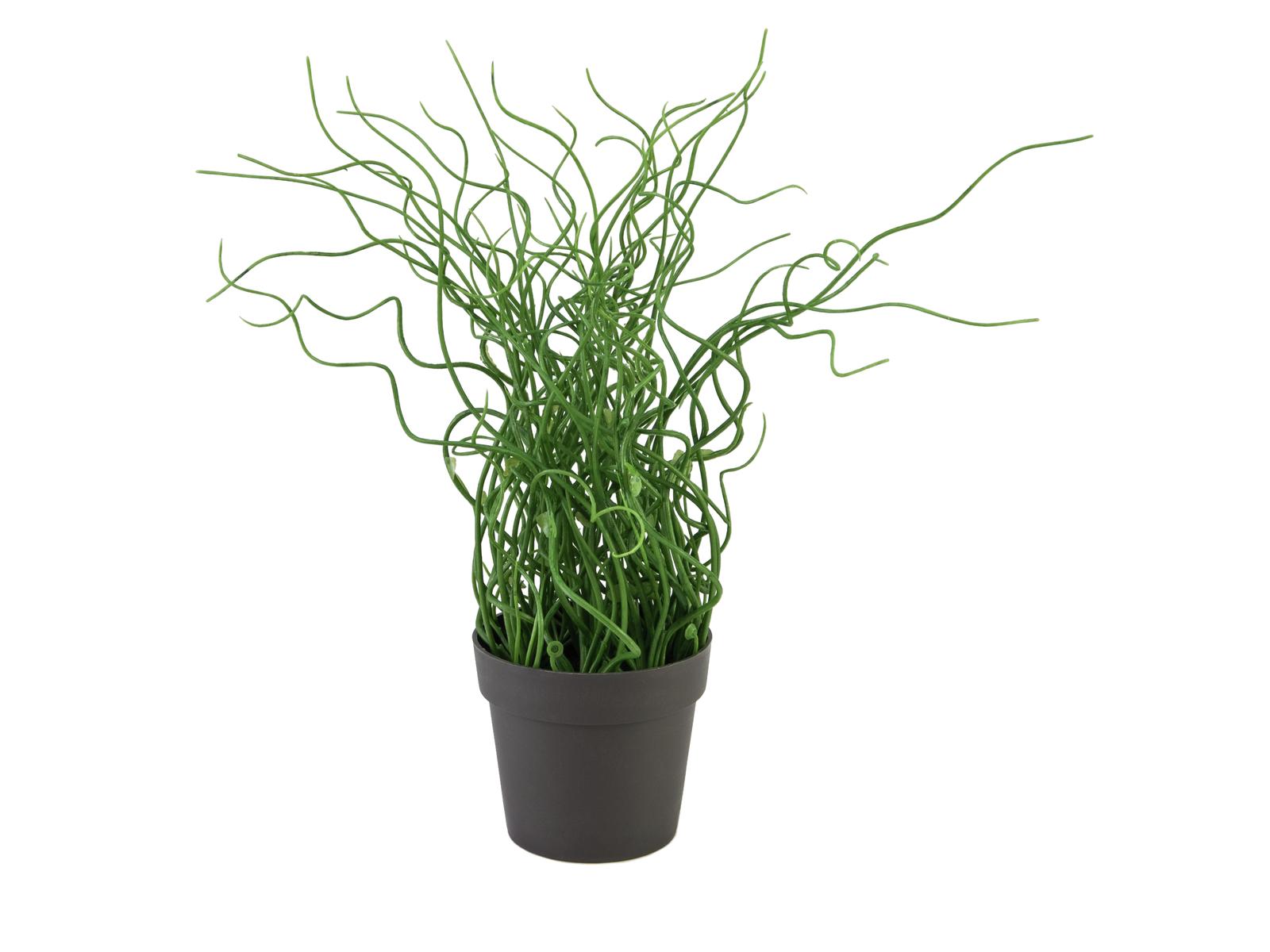 EUROPALMS Korkenzieher-Gras im braunen Topf, PE, Kunstpflanze, 38cm