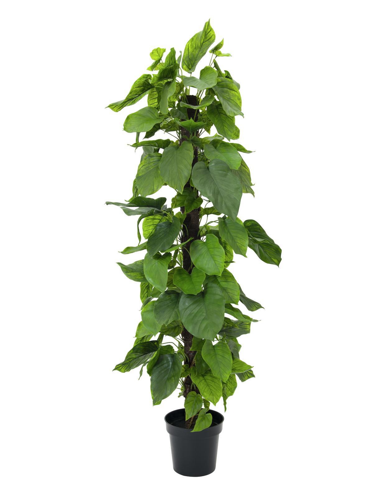 EUROPALMS Pothos, Kunstpflanze, 180cm