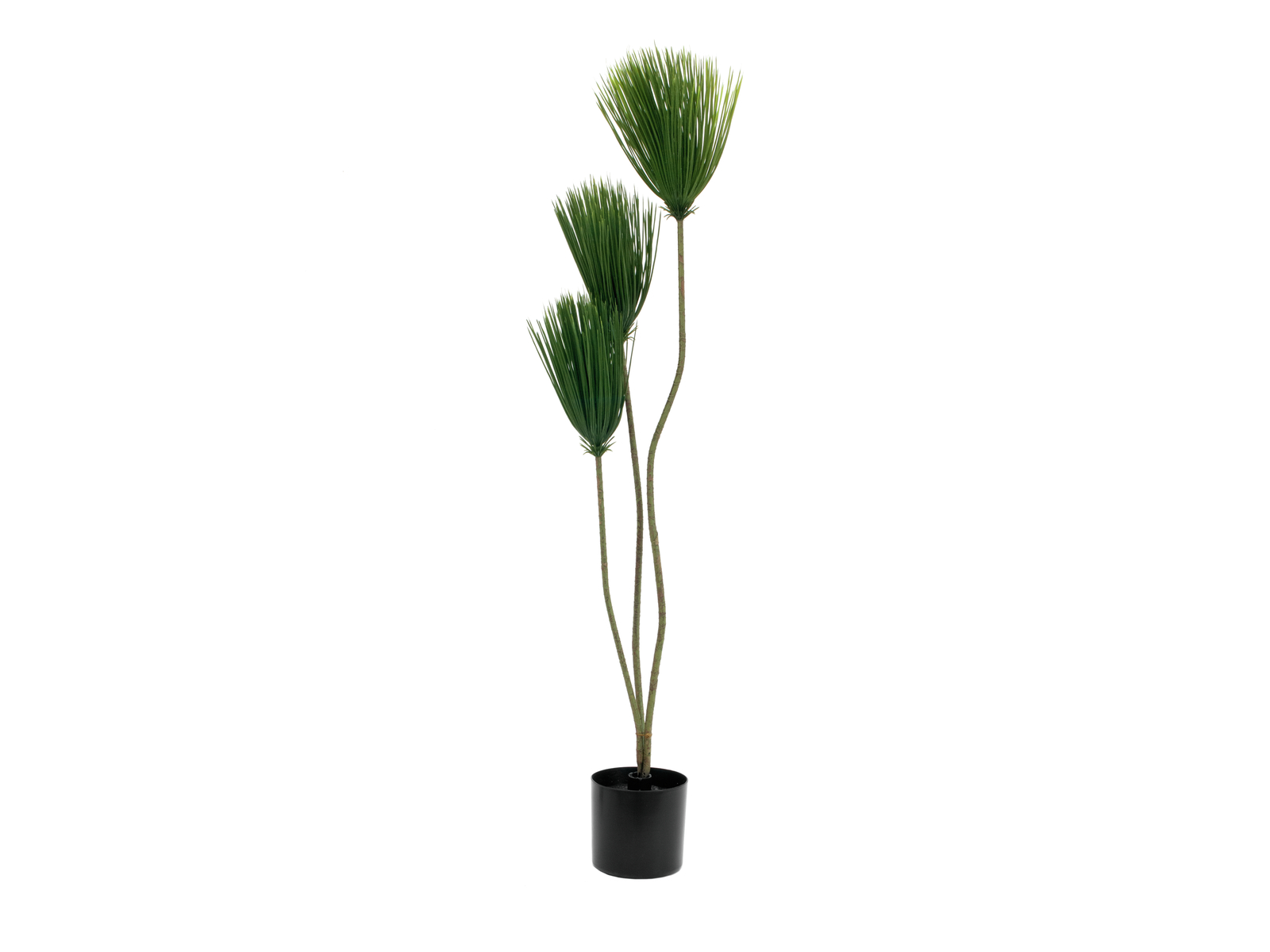 EUROPALMS Papyrus, Kunstpflanze, 100cm