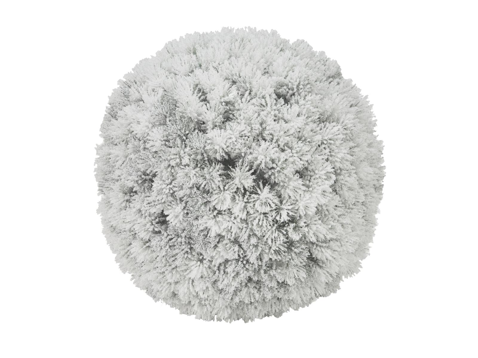 EUROPALMS di Pino, palla, accorsi, 30cm