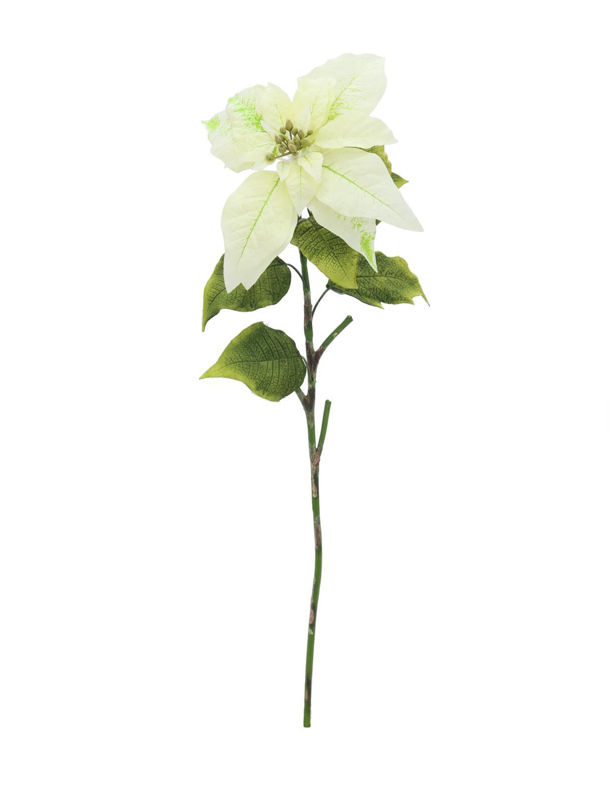 EUROPALMS Poinsettia, crema, 70cm