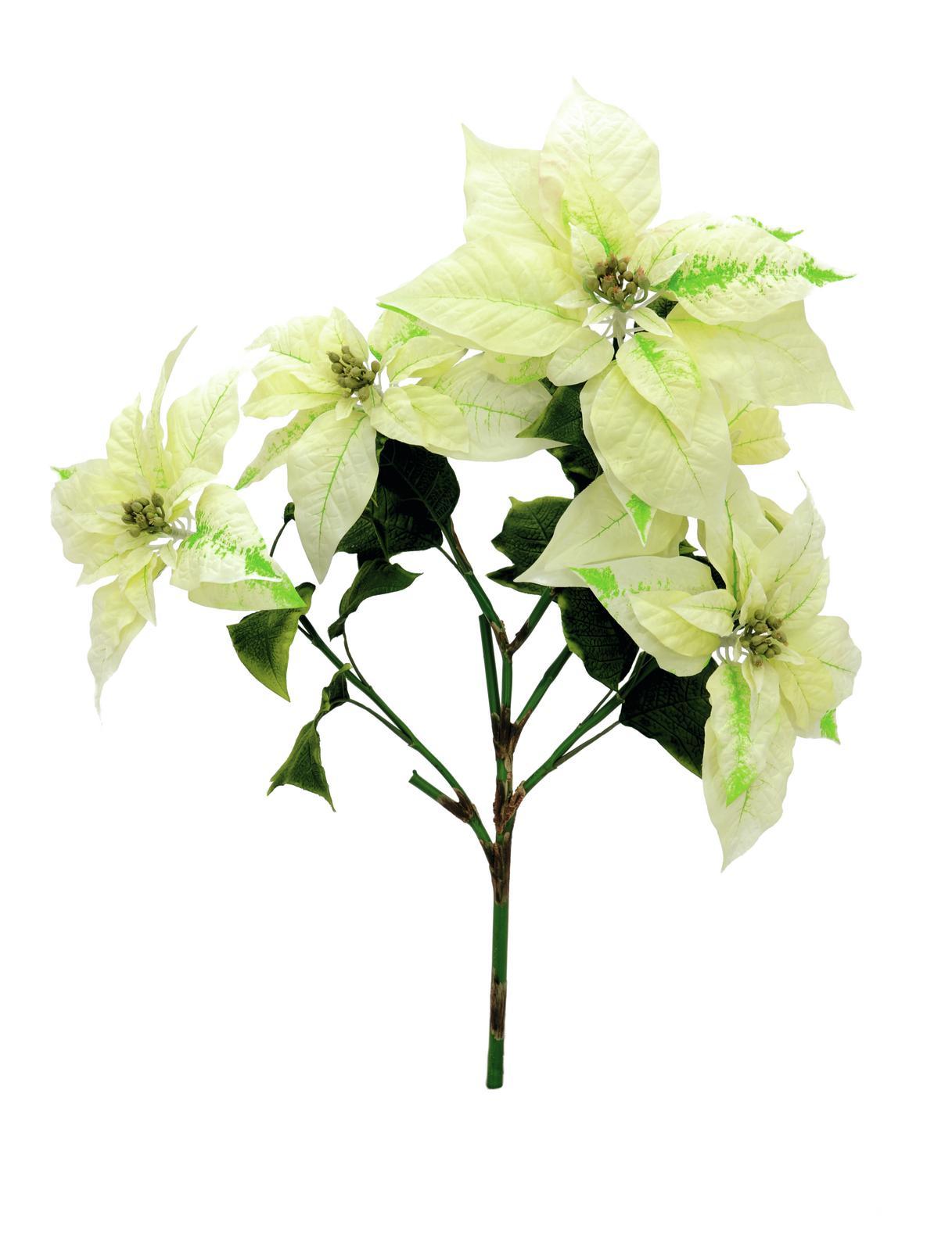 EUROPALMS Poinsettia bush, panna, 60 cm