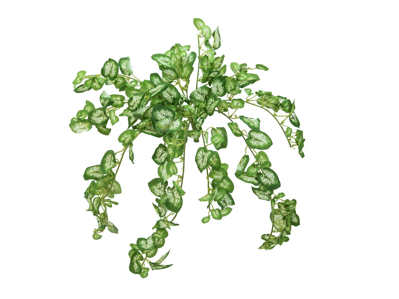 EUROPALMS pianta artificiale edera rampicante Nephthytis 50 cm