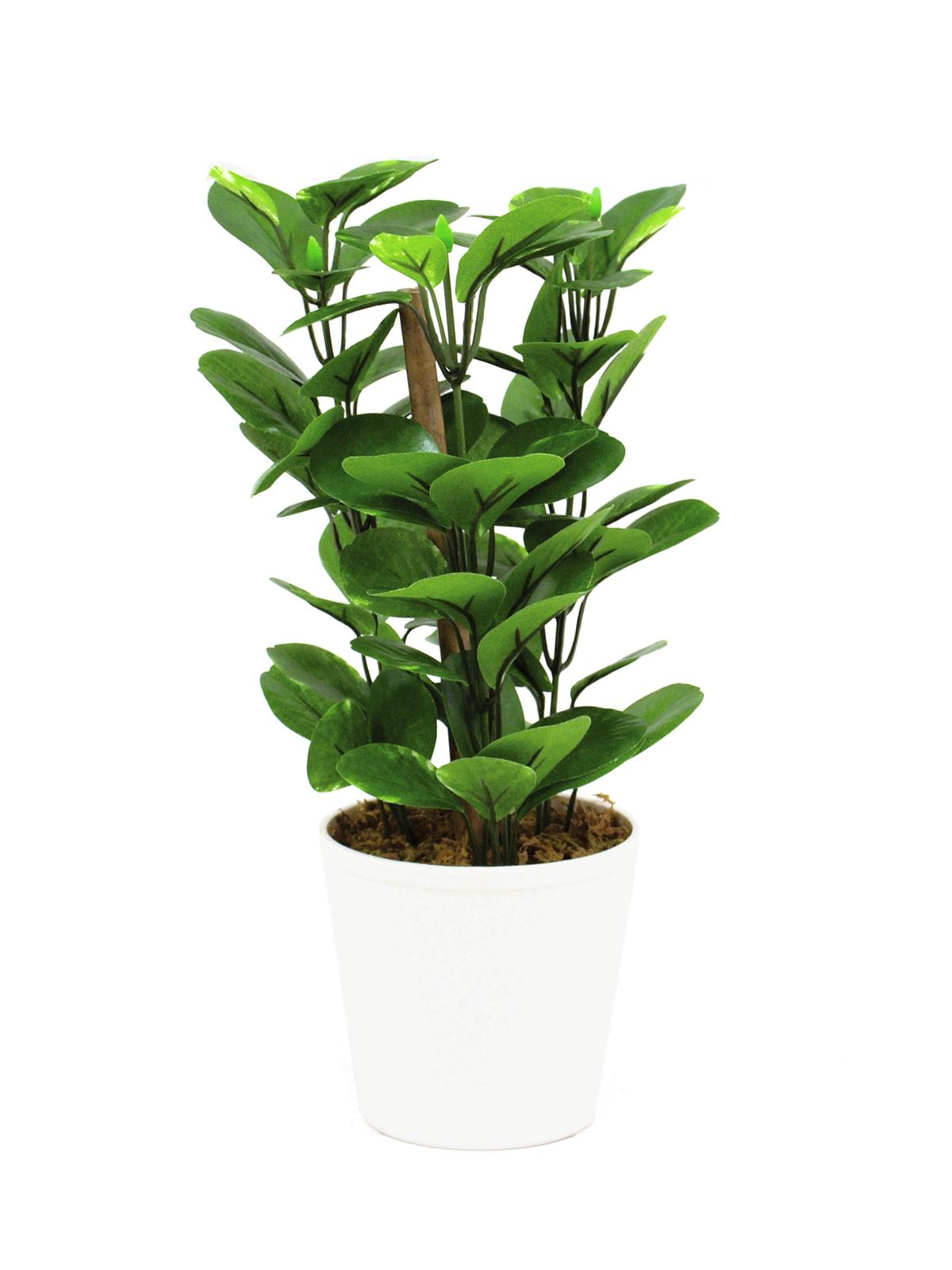 EUROPALMS Grünblatt, künstlich, 30cm