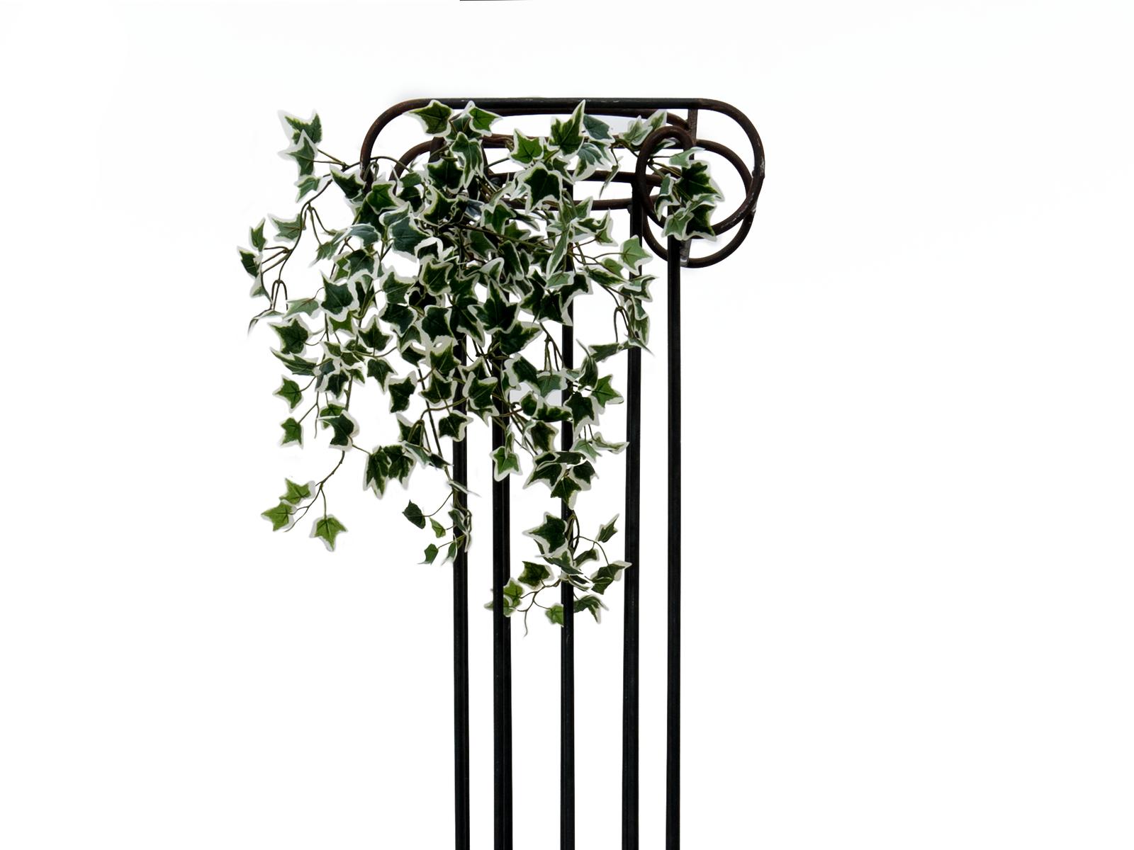 EUROPALMS Olanda Ivy Bush Viticcio Classico, 60cm