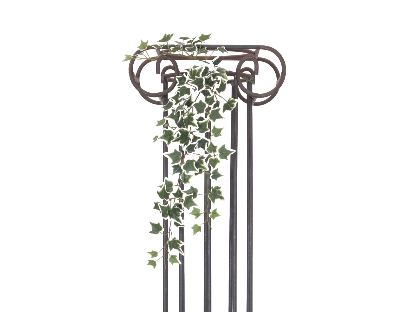 EUROPALMS Olanda Ivy Bush Viticcio Classico, 70cm