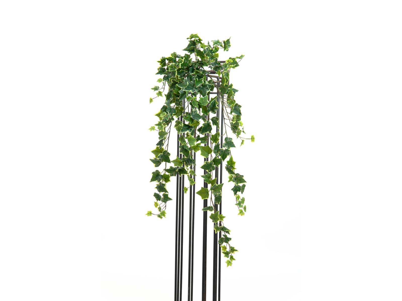 EUROPALMS Hollan Ivy Bush, Premium, 100cm