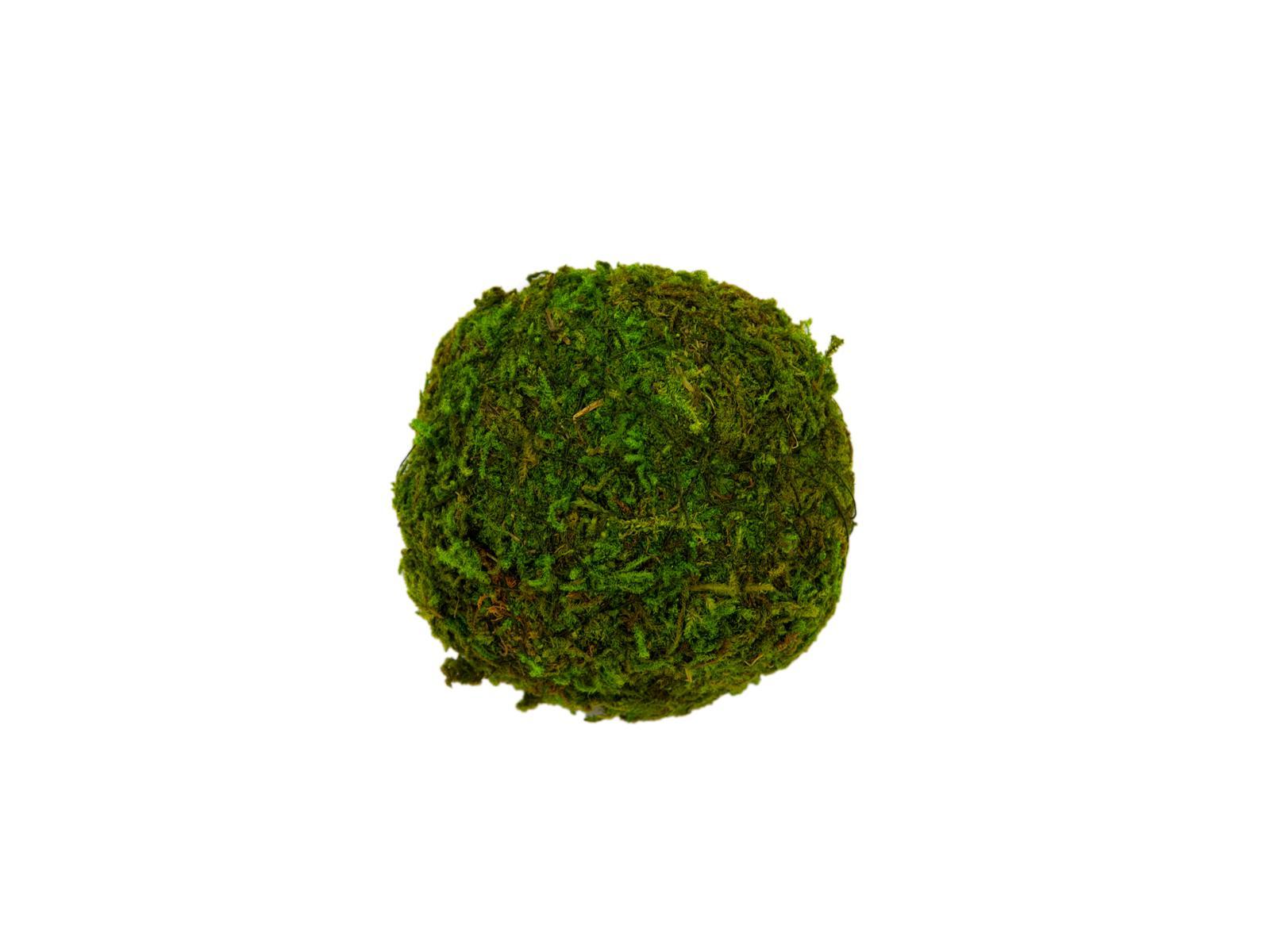 EUROPALMS Moss palla set, 7cm, 6x