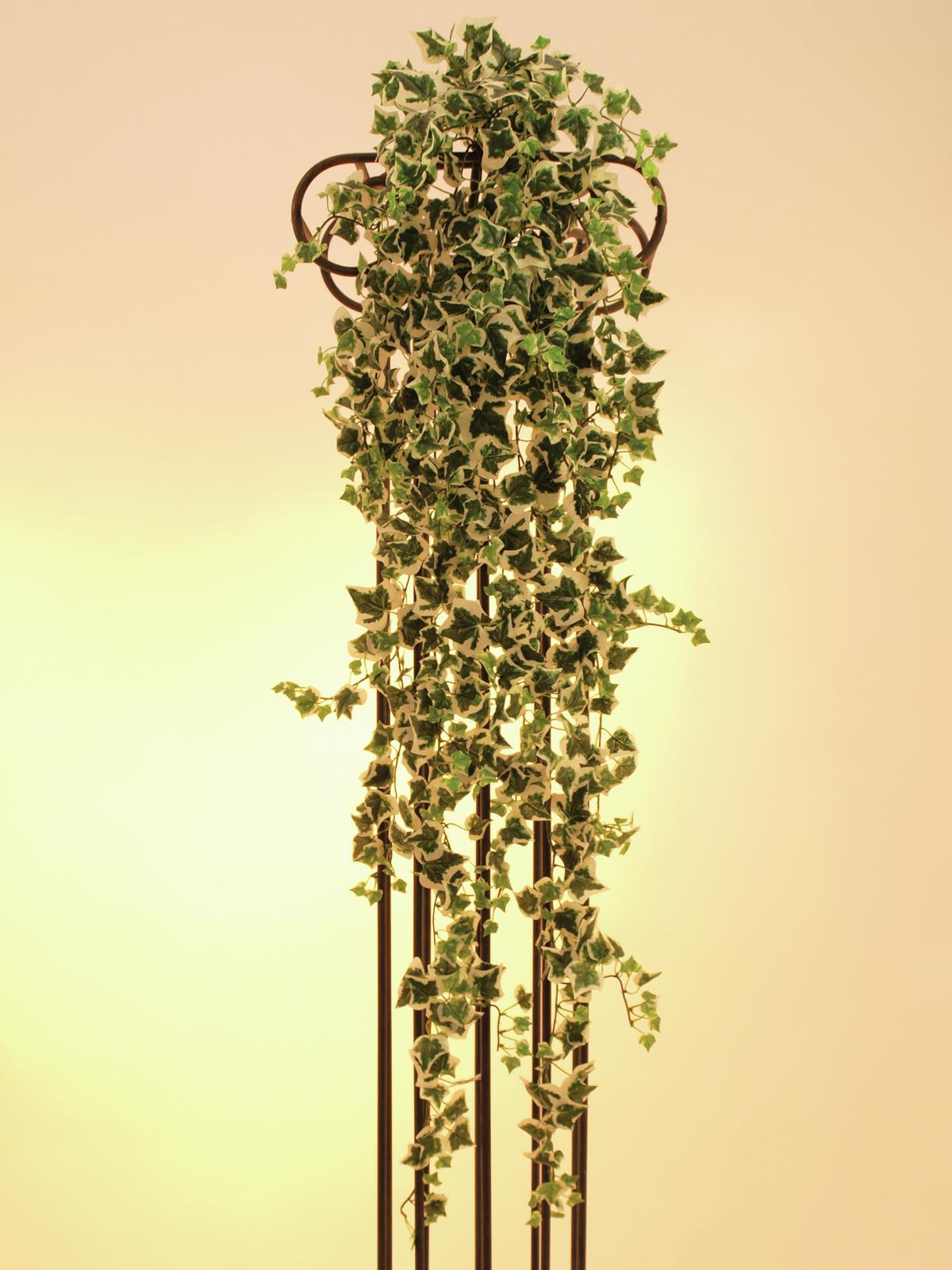 EUROPALMS Ivy viticcio, verde-bianco, 100cm