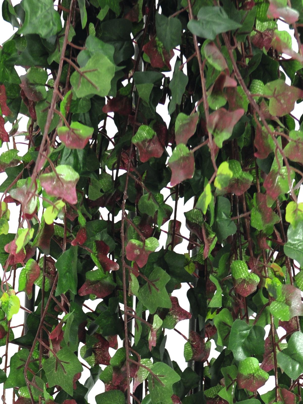 EUROPALMS Deluxe ivy viticcio, verde-rosso 160cm