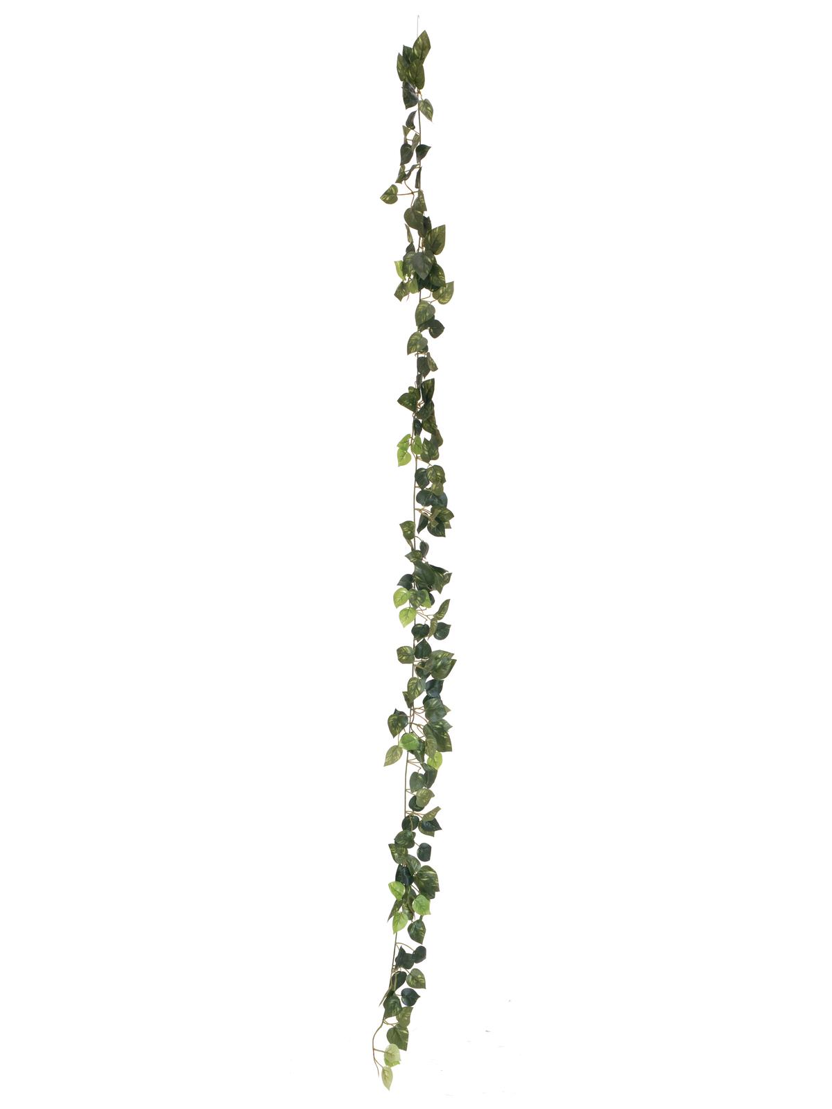 EUROPALMS Pothos Ghirlanda Classica, 180cm