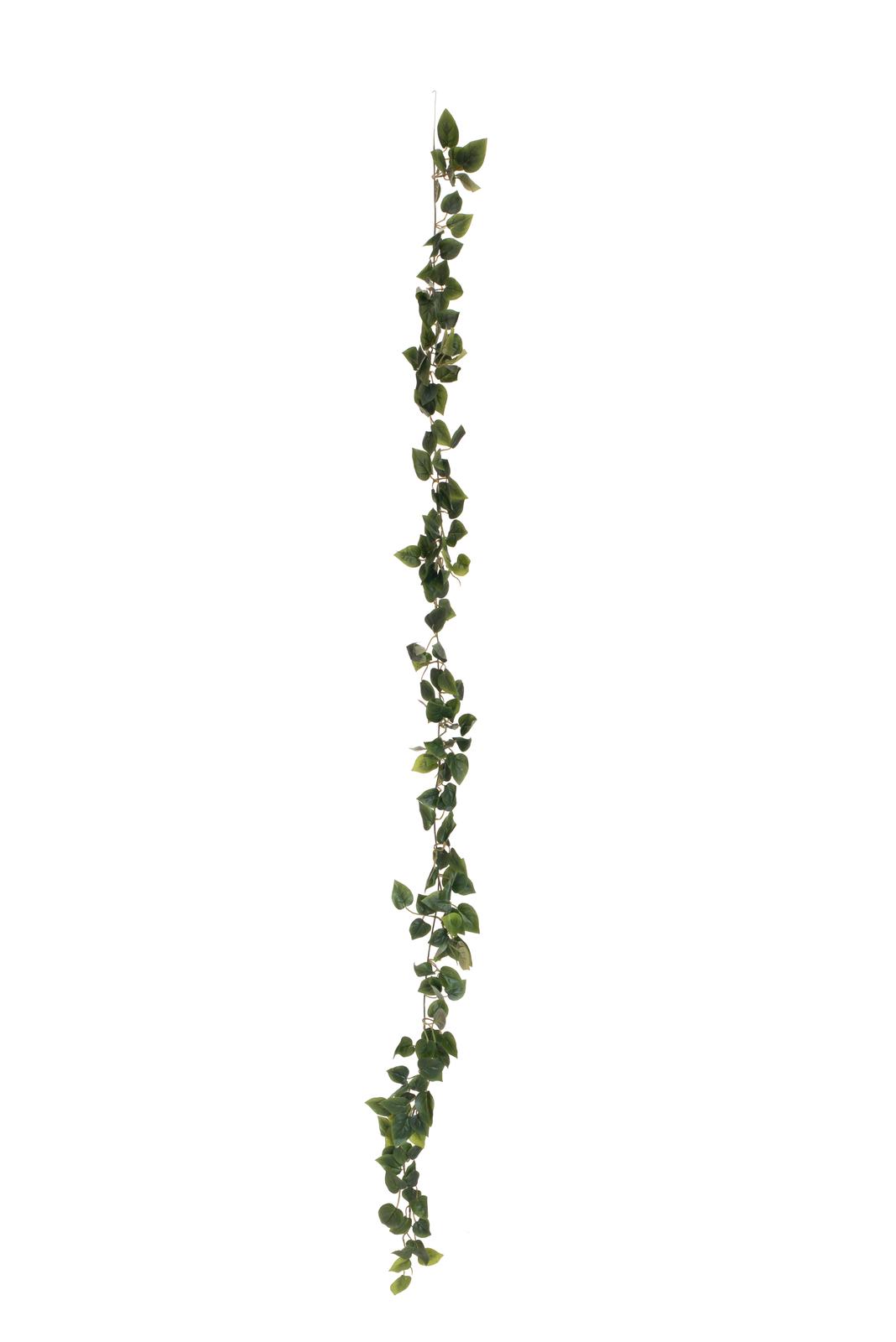 EUROPALMS Filodendro Ghirlanda Classica, 180cm