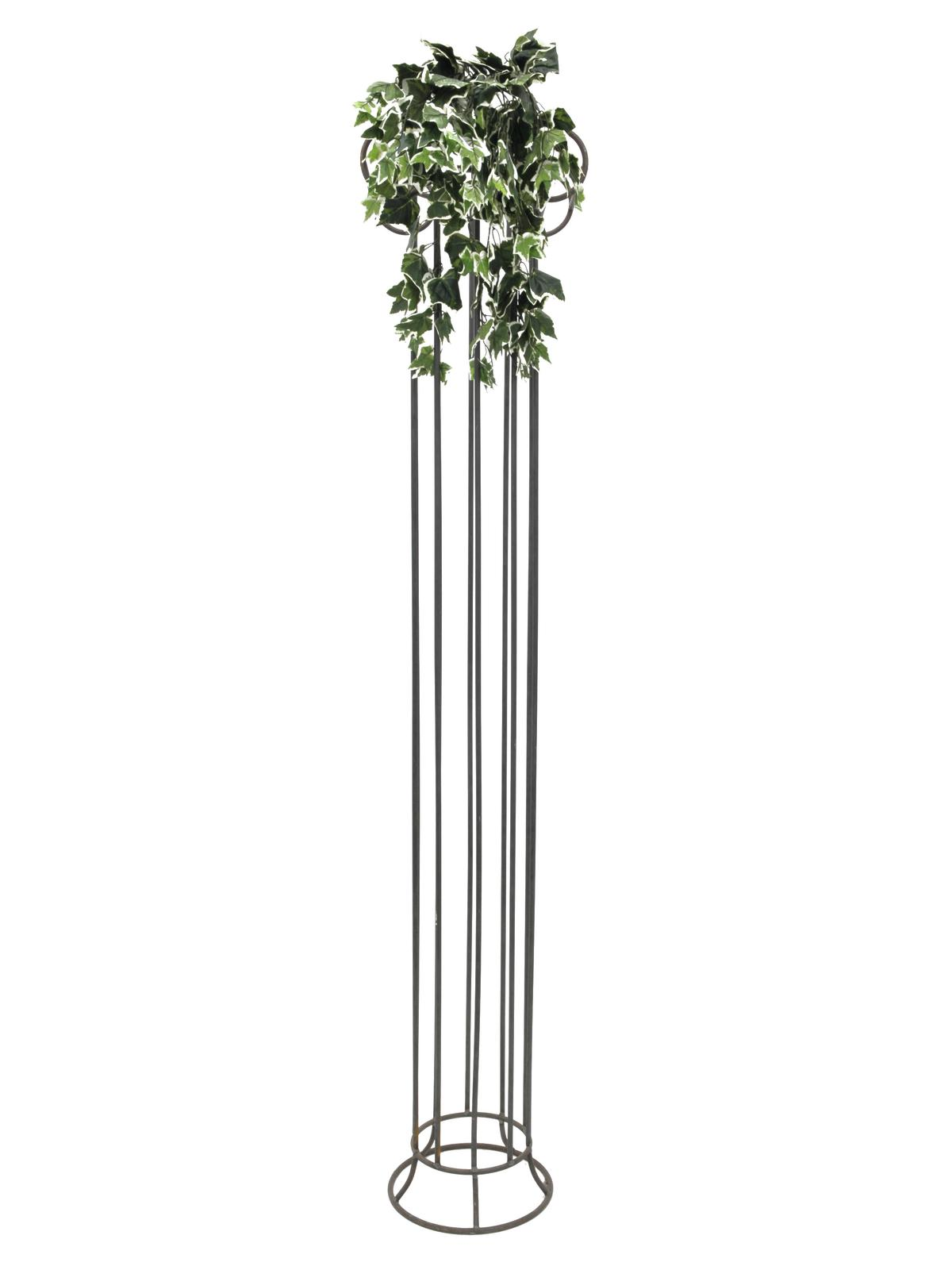 EUROPALMS olandese ivy bush, 60cm
