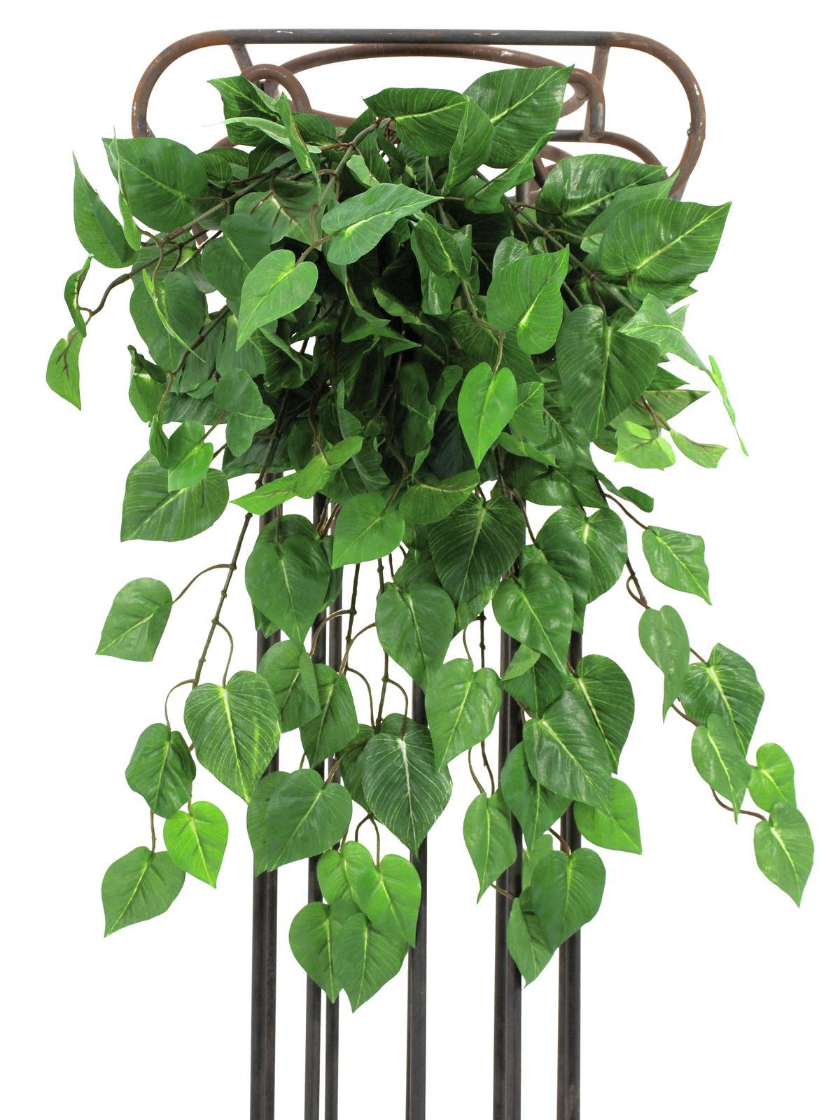 EUROPALMS Philo bush, verde, 60cm