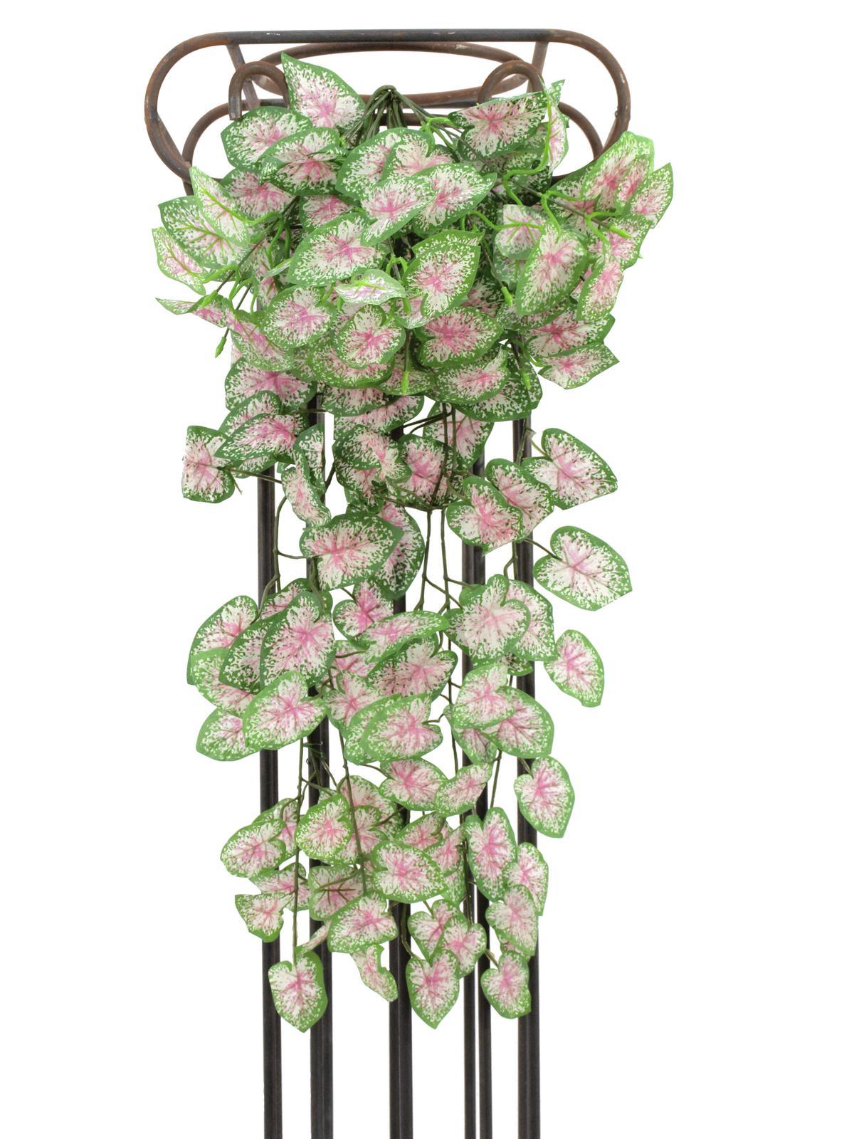 EUROPALMS Begonia cespuglio, 60cm