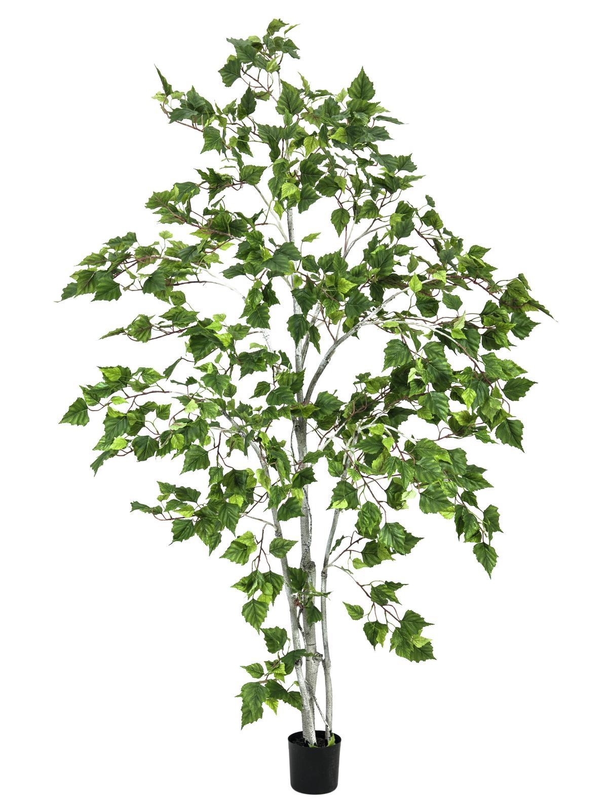 EUROPALMS Birkenbaum, Kunstpflanze, 180cm