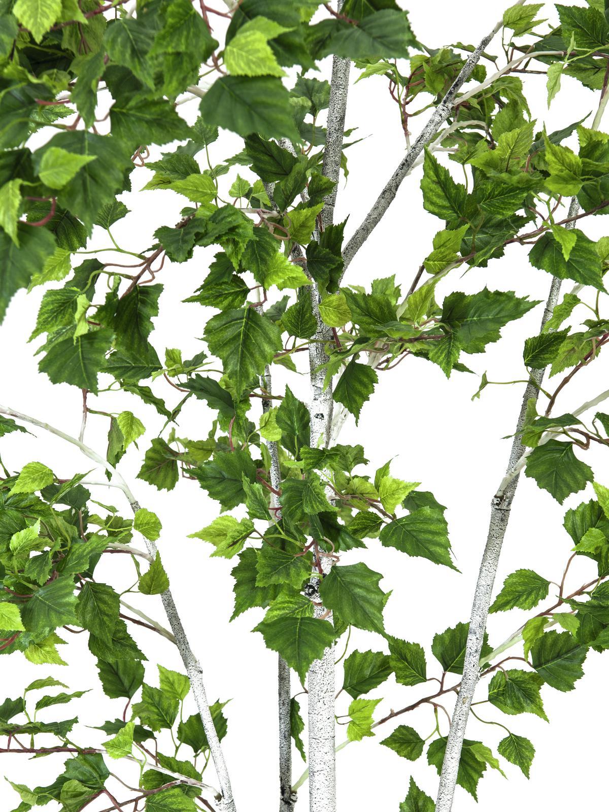 EUROPALMS Betulla, 180cm