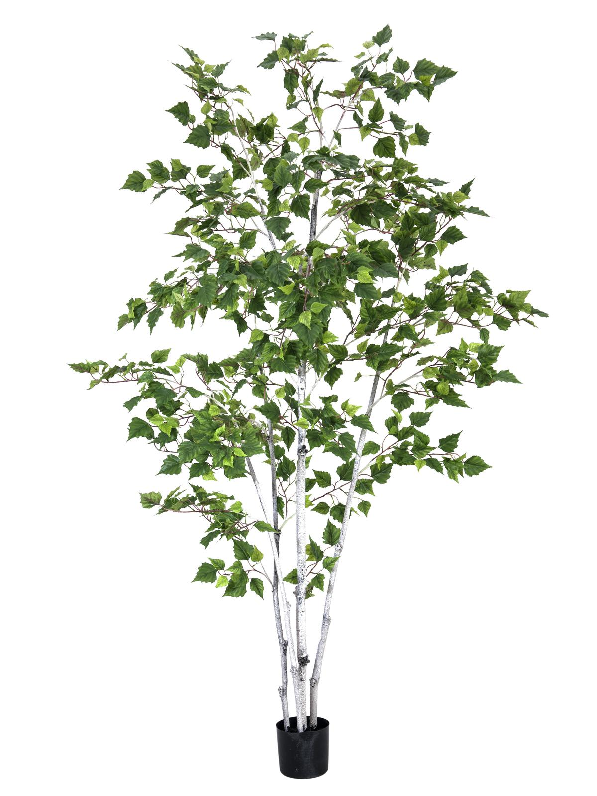 EUROPALMS Birkenbaum, Kunstpflanze, 210cm