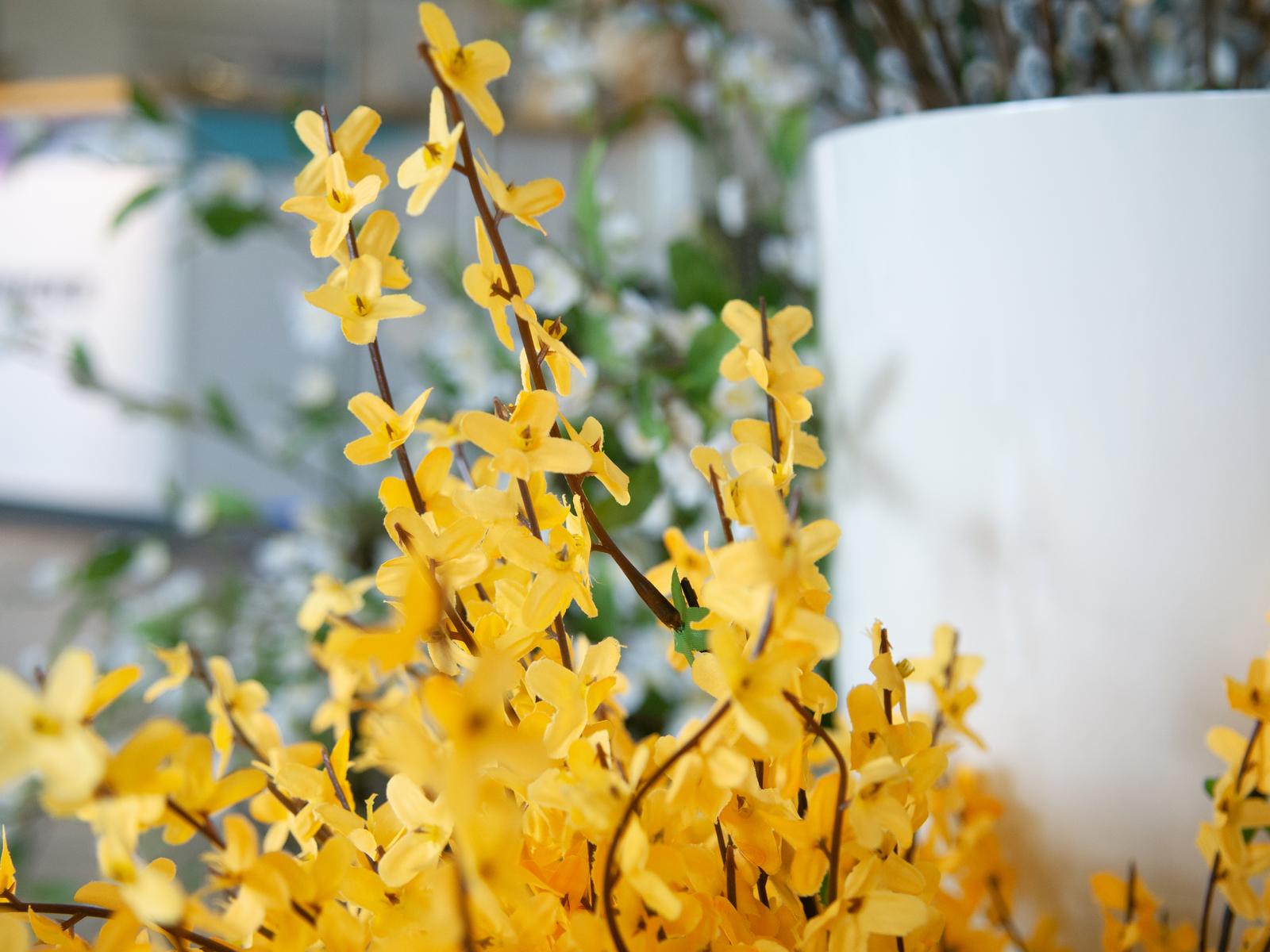 EUROPALMS Forsythia cespuglio, 60cm