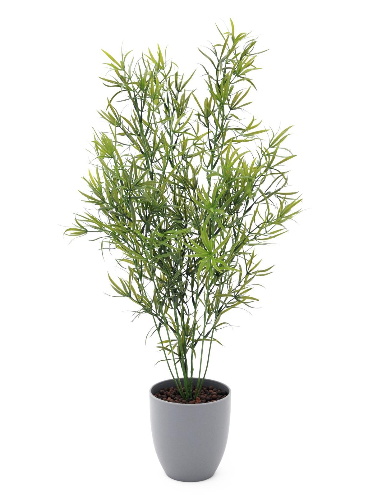 EUROPALMS Asparagi, 70cm