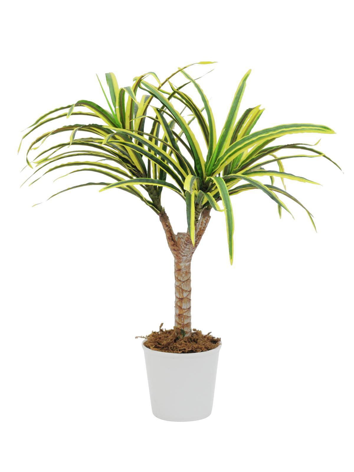 EUROPALMS pianta artificiale Dracena giallo-verde, 50cm