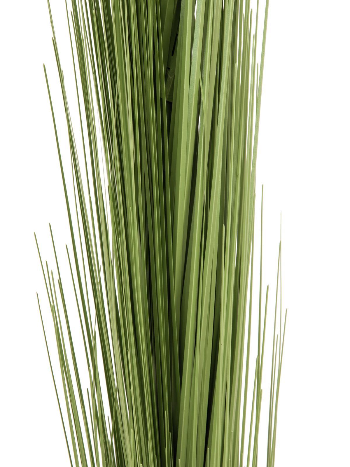 EUROPALMS Canna di erba, verde chiaro, 127cm