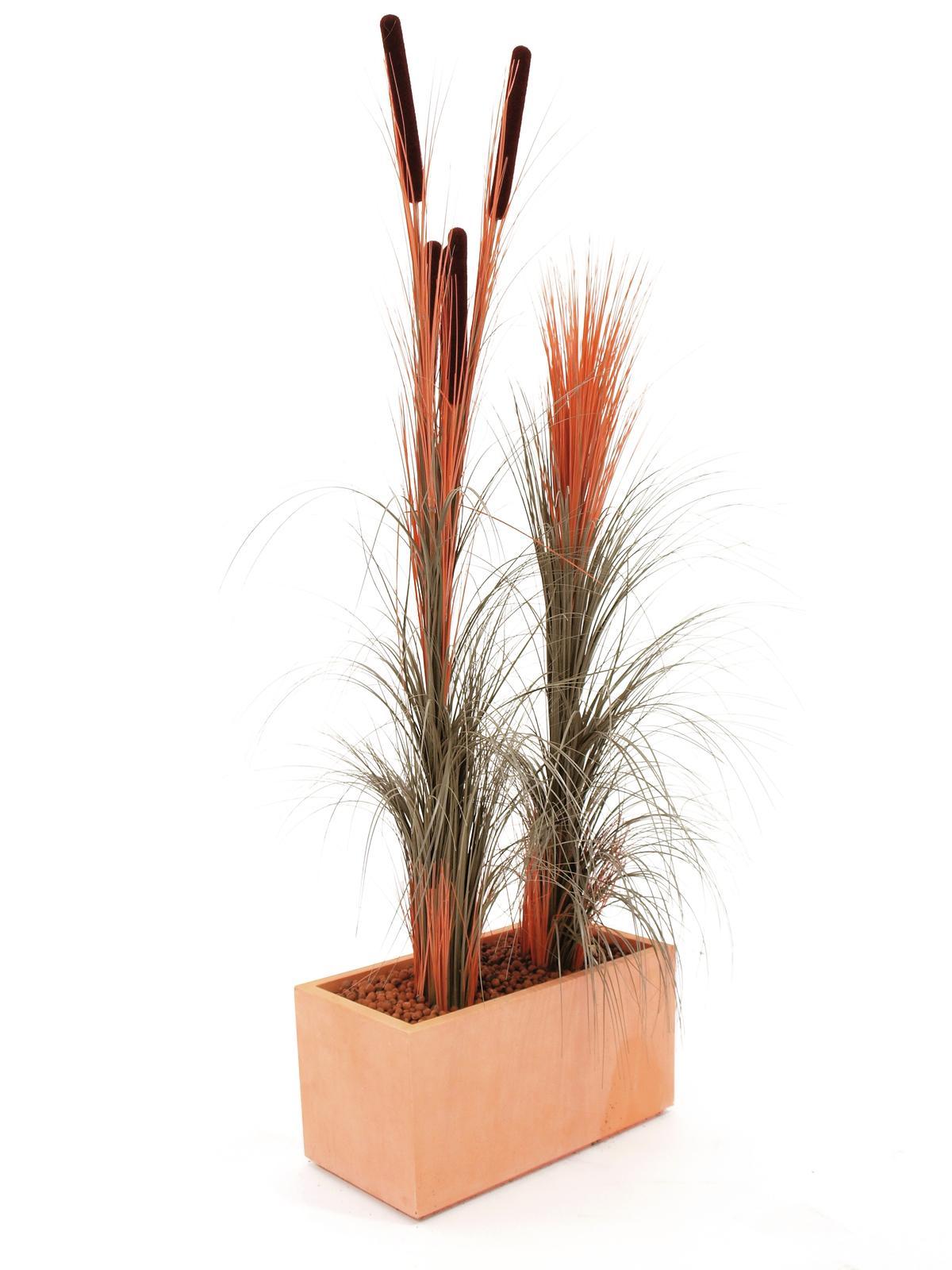 EUROPALMS Canna di erba w/ tife, di colore marrone chiaro,152 cm