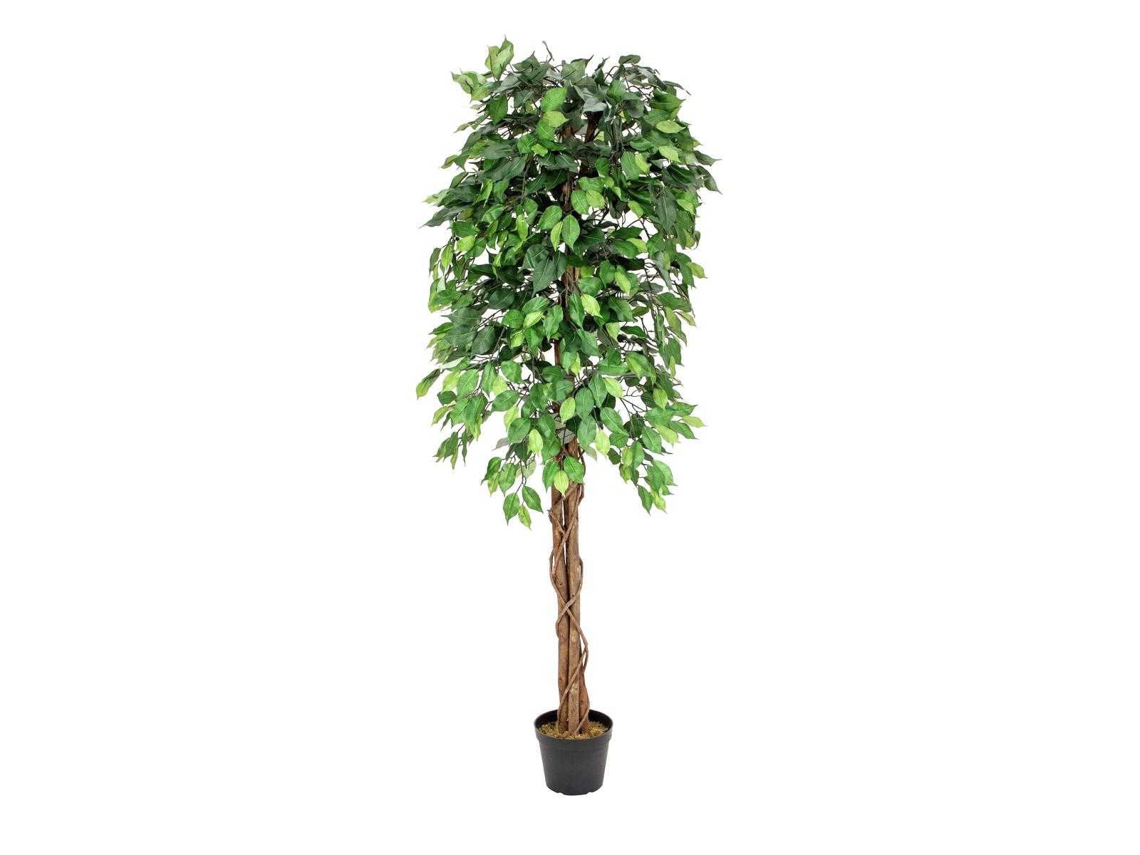EUROPALMS Ficus-Benjamini Multi-Stamm, Kunstpflanze, 180cm