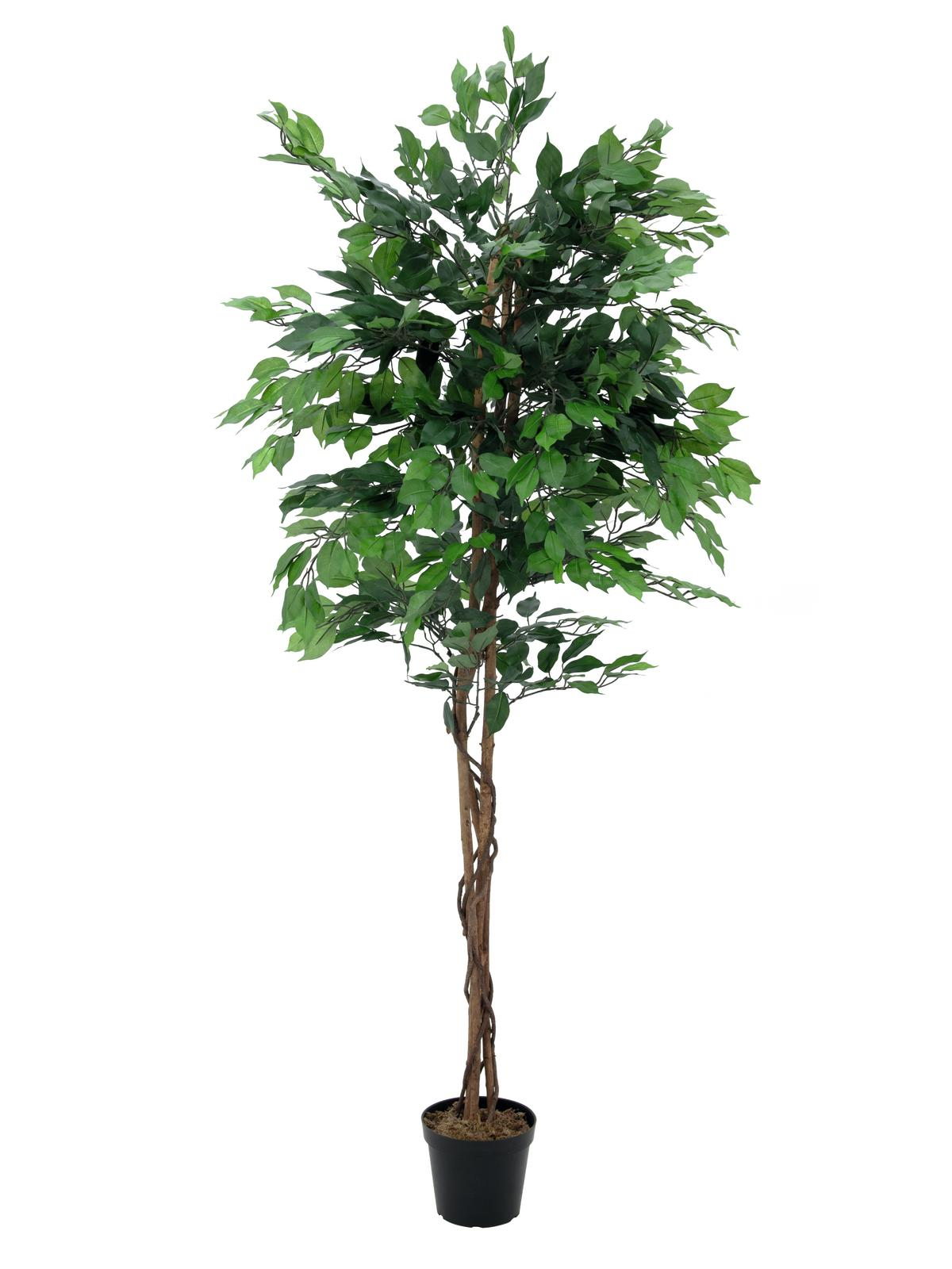 EUROPALMS Ficus-Benjamini Multi-Stamm, Kunstpflanze, 210cm