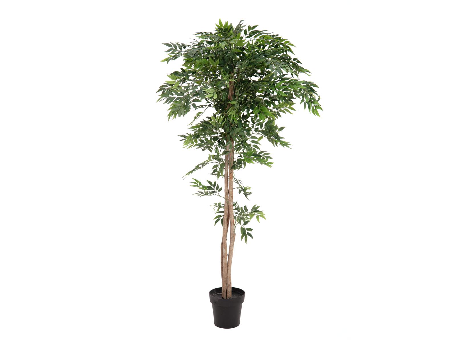 EUROPALMS Ficus Longifolia, Kunstpflanze, 165cm