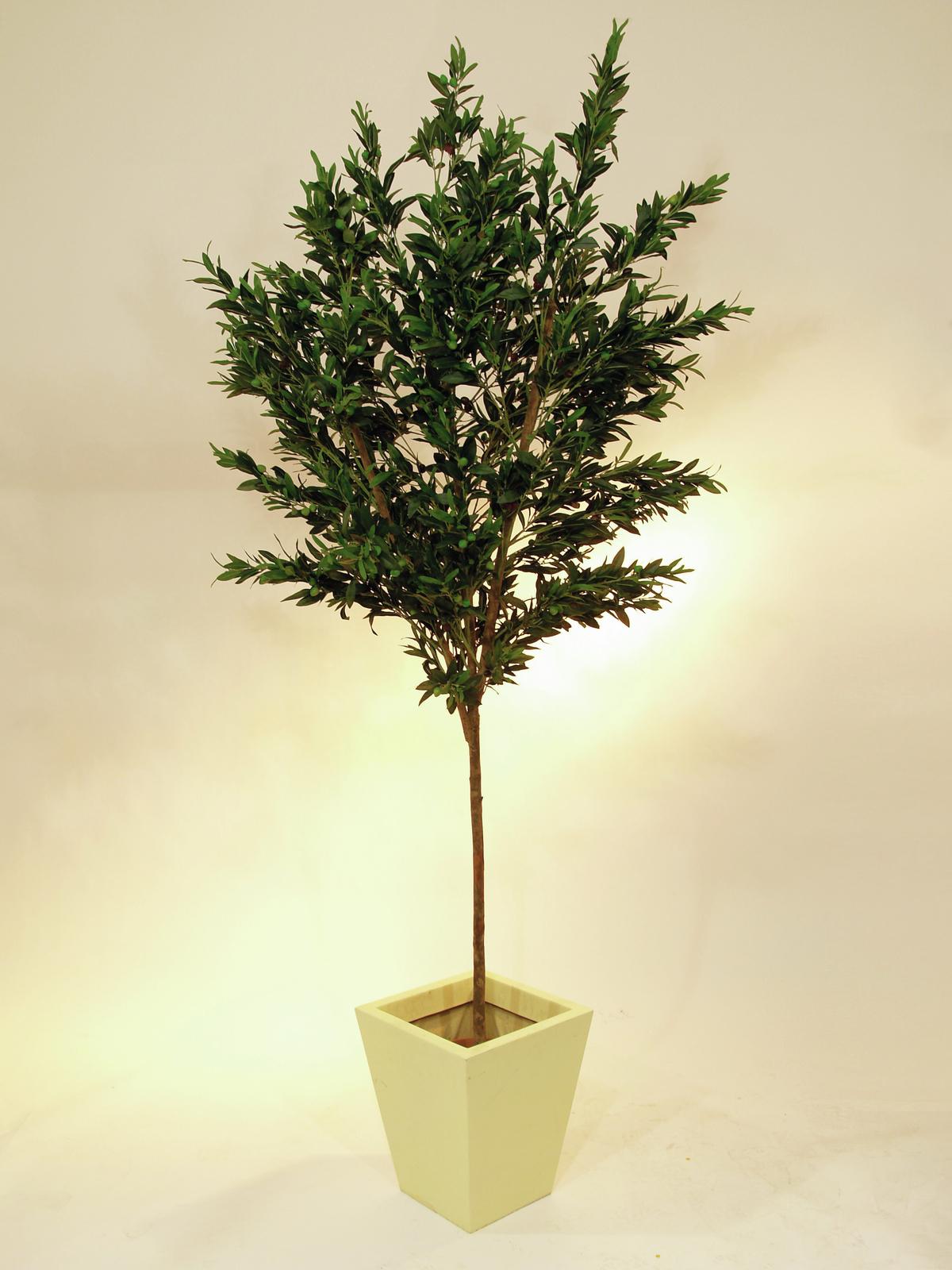 EUROPALMS Olivo con frutti, 250cm