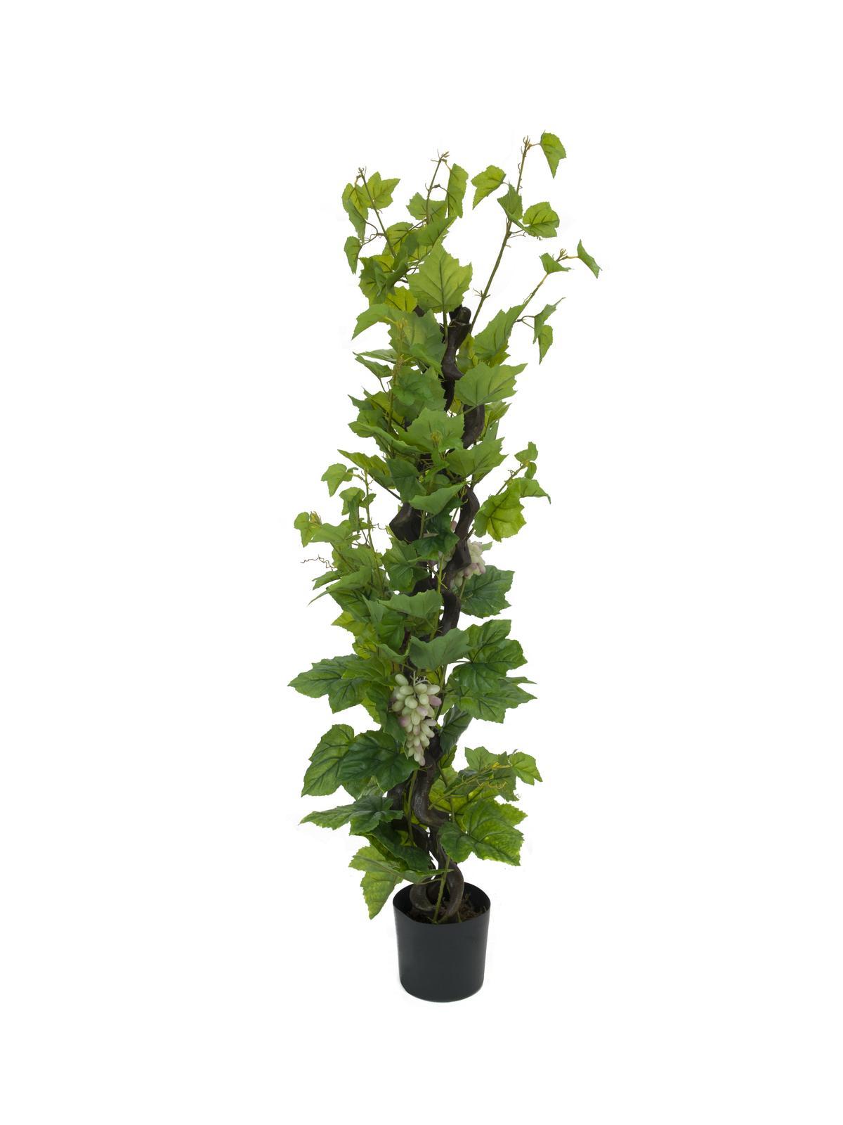 EUROPALMS Vite con uva, 160cm