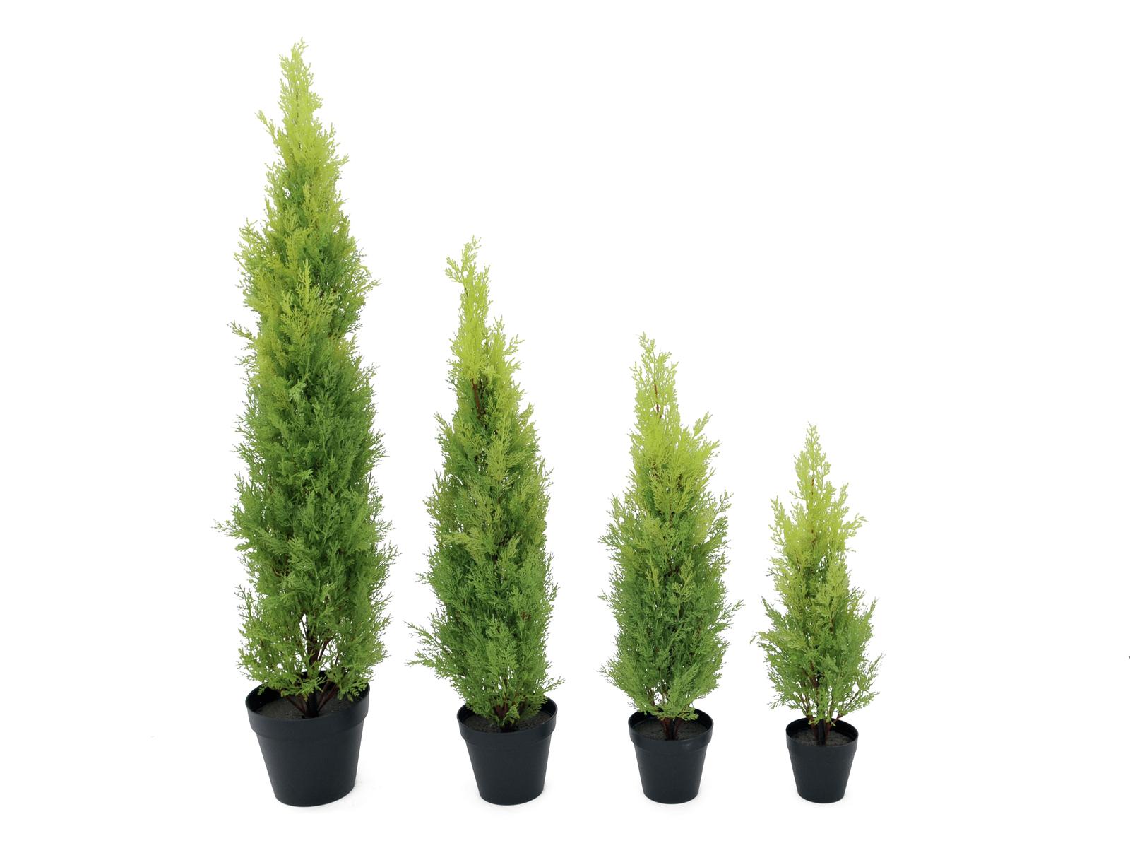 EUROPALMS pianta decorazione C