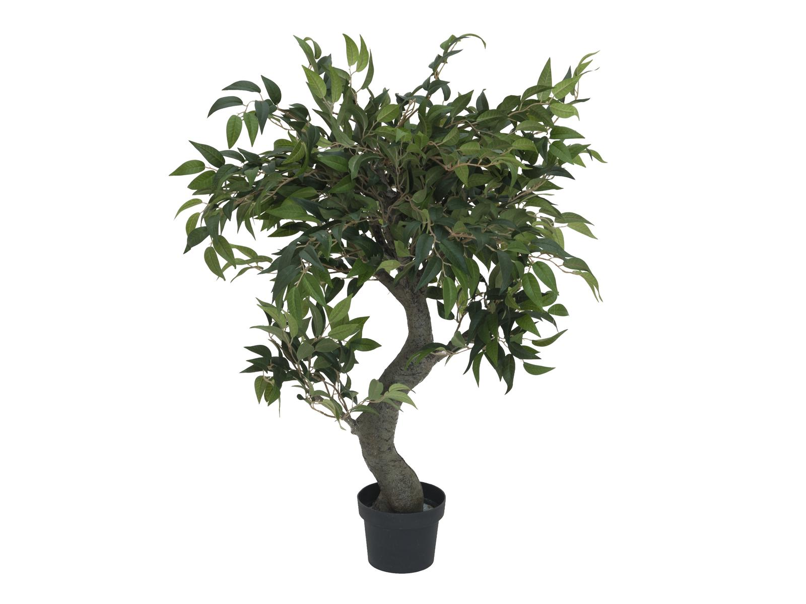 EUROPALMS Ficus Albero di Foresta, 80cm