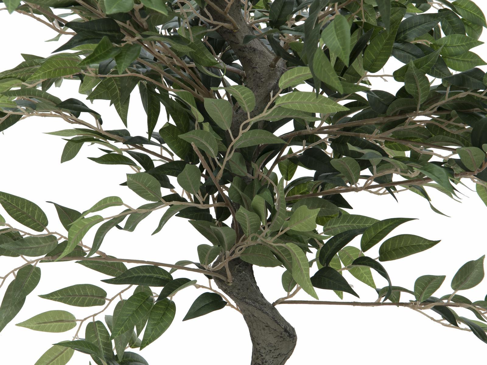 EUROPALMS Ficus Albero di Foresta, 110 cm