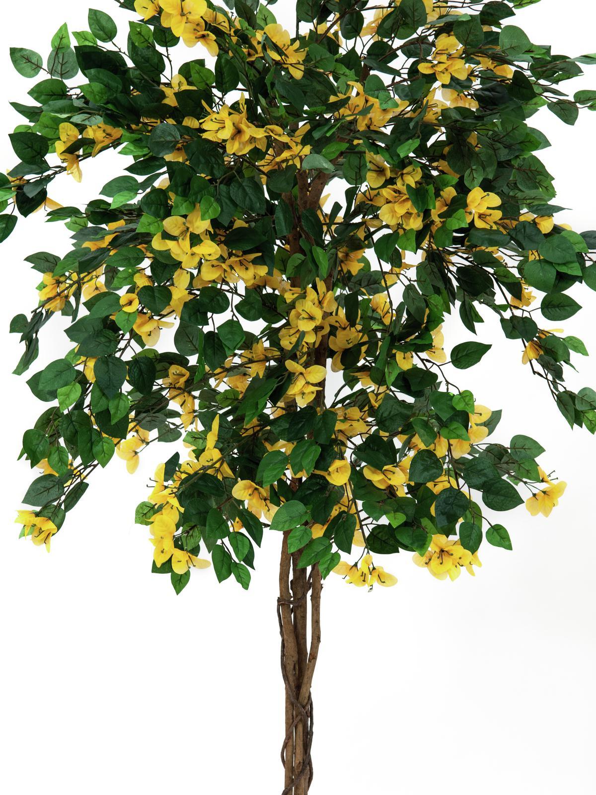 EUROPALMS Bouganville, giallo, 180cm