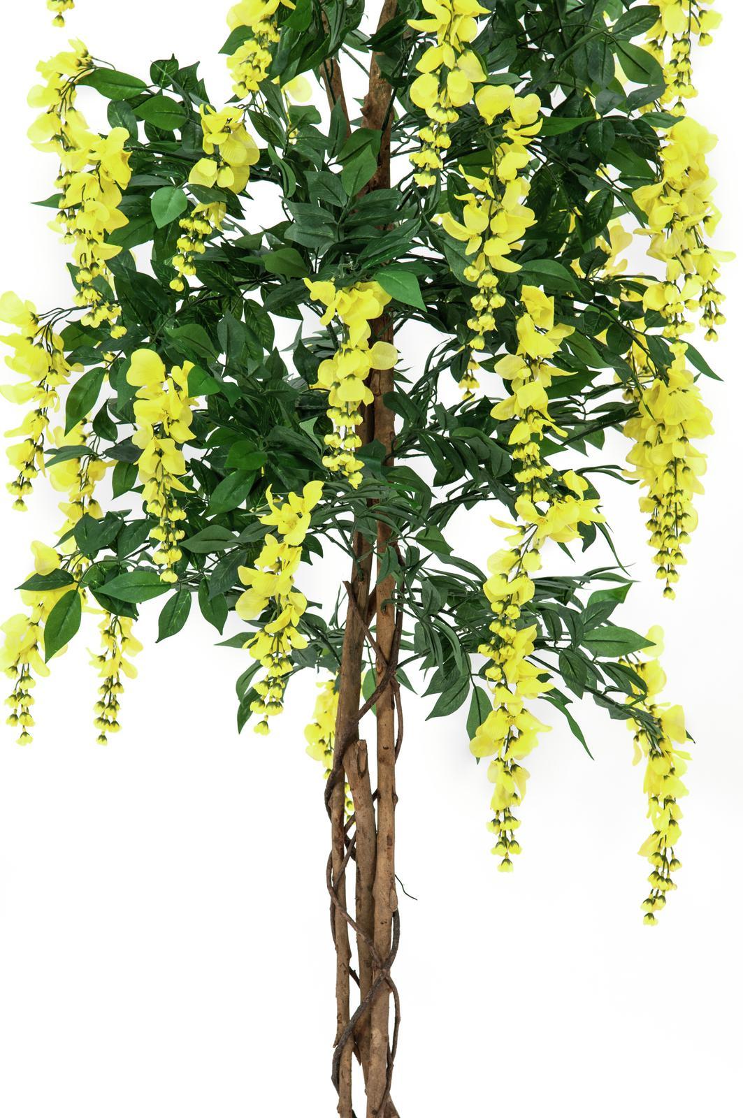 EUROPALMS Glicine, giallo, 180cm