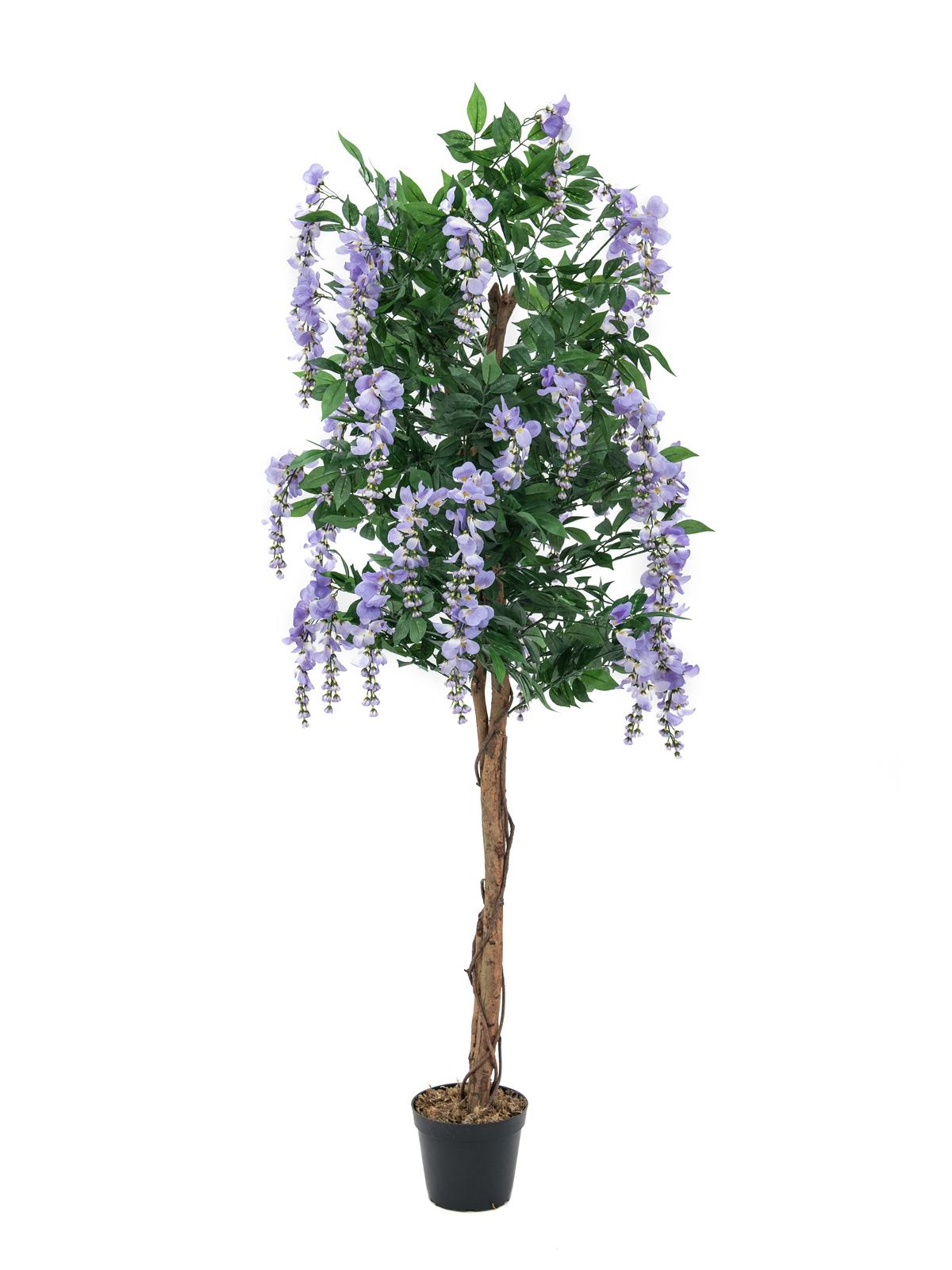 EUROPALMS Glicine, viola, 150cm