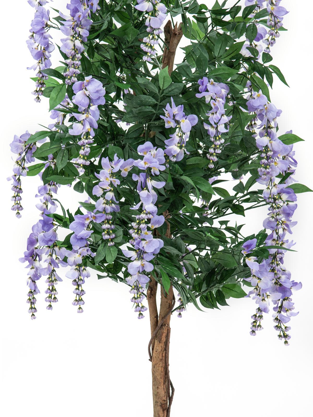 EUROPALMS Glicine, viola, 180cm