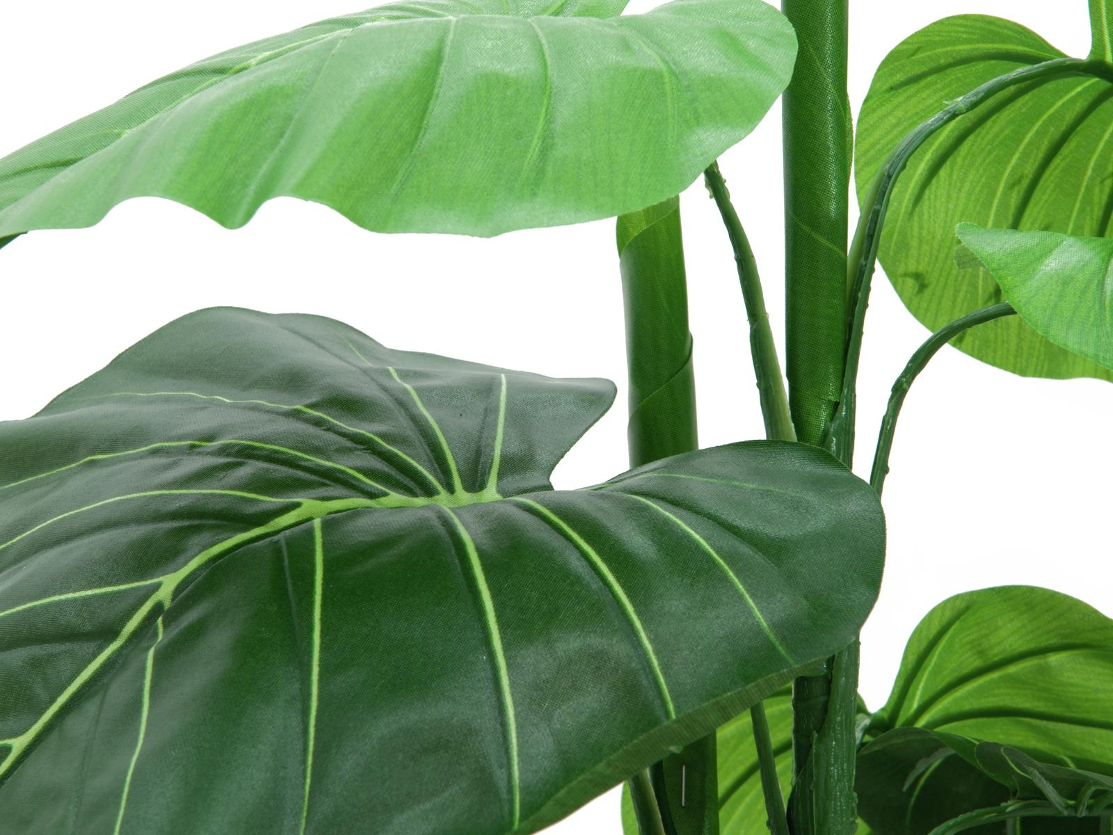 EUROPALMS Caladium pianta, 90cm